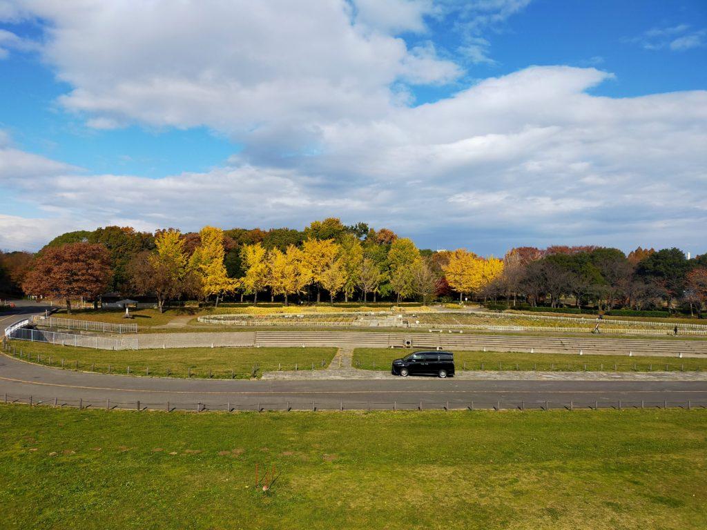 庄内緑地公園の黄葉