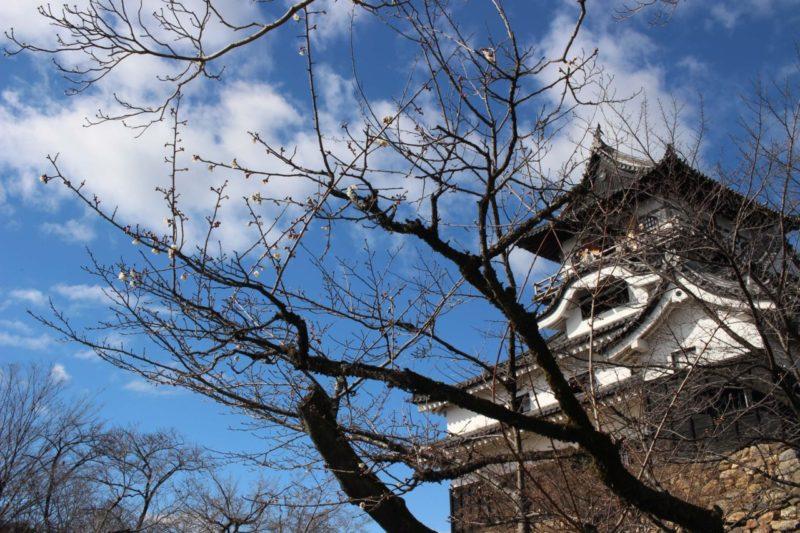 梅の蕾と国宝犬山城