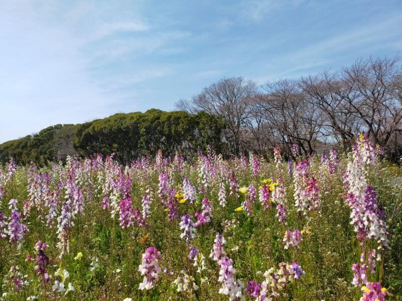 庄内緑地公園の花